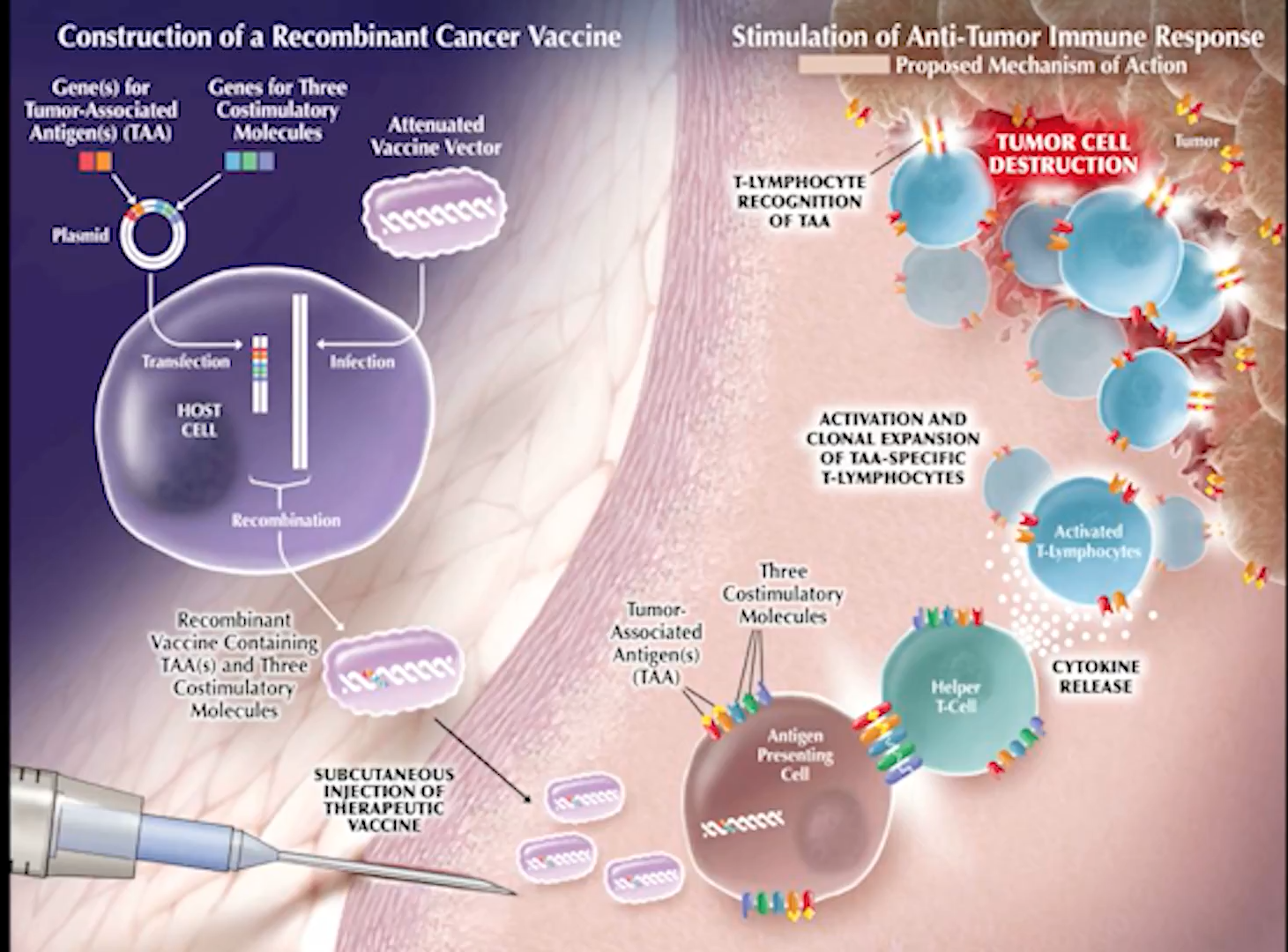 As an Illustration, this diagram shows the Immunotherapy for Prostate Cancer Process